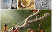 Vechtende mieren in de tuin plotten folk remedies