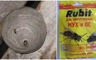 Hoe om te gaan met wespen in huis