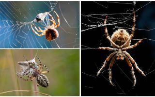 Terwijl de spin een web weeft