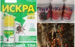 Hoe om te gaan met mieren en bladluizen op appelbomen
