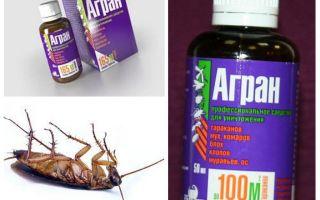 Agran-remedie tegen kakkerlakken