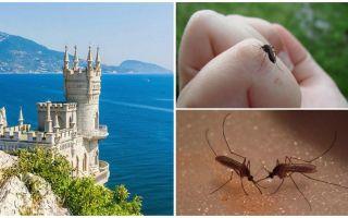 Zijn er muggen op de Krim