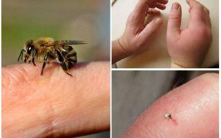 Wat is een nuttige bijensteek voor een persoon?