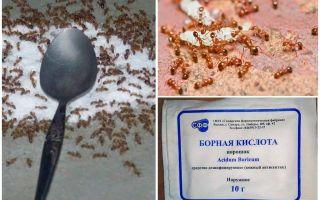 Hoe om te gaan met rode mieren