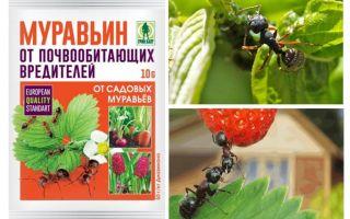 Ants 10g van mieren: instructies voor gebruik en beoordelingen