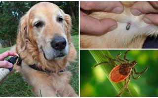 Sprays voor honden tegen teken en vlooien