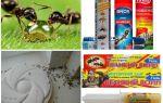 Hoe mieren en mierenhoop te vernietigen