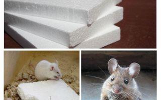Knagen muizen aan schuim