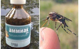 Vloeibare ammoniak van muggen