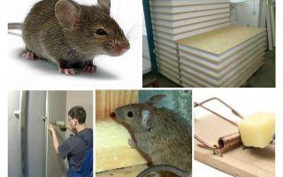 Knagen muizen gierpanelen