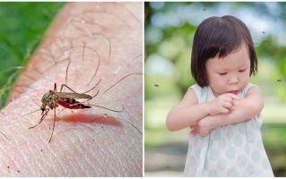 Hoeveel dagen gaat de muggenbeet?