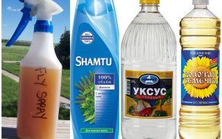 Doe-het-zelf muggenspray shampoo + azijn