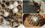Hoe het hornet's nest te verwijderen