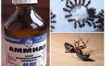 Ammoniak van mieren en bladluizen