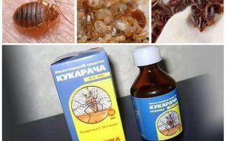 Cucaracha-remedie voor bedwantsen