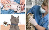 Hoe zich te ontdoen van vlooien in een kat of kat thuis