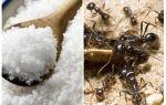 Zout tegen mieren in de tuin