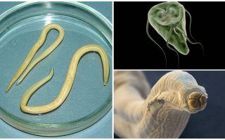 Vergelijking van Giardia en Worms