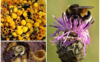 Heeft honing hommels