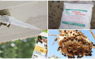 Hoe de wespen vergiftigen