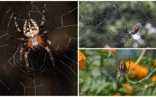 Spinnen weten hoe te vliegen