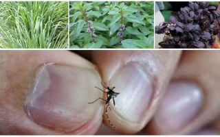 Welke planten muggen afstoten: gras, bomen en bloemen