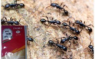 Betekent Thunder 2 van mieren
