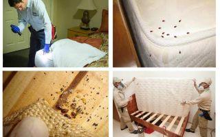 Waar verstoppen insecten zich in het appartement