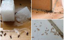 Hoe zich te ontdoen van mieren in een huis folk remedies
