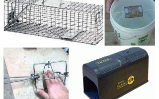 DIY rattenval