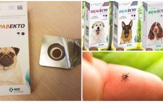 Tabletten Bravekto van teken voor honden