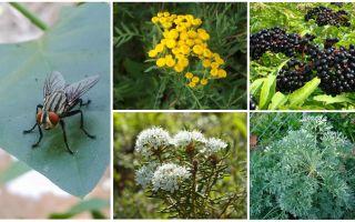 Welke geur is bang voor vliegen en muggen