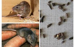 Hoe om te gaan met ratten in een privé huis