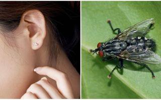 Hoe je thuis een vlieg uit je oor kunt krijgen
