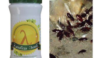 Lambda Probe Remedy voor kakkerlakken
