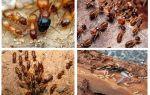 Wie zijn de termieten