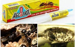Absolut van mieren
