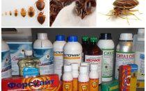 Herziening van de meest effectieve remedies voor binnenlandse bugs