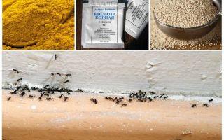 Fondsen van mieren in het huis in het land