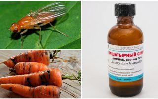 Vecht tegen wortelvlieg met ammoniak