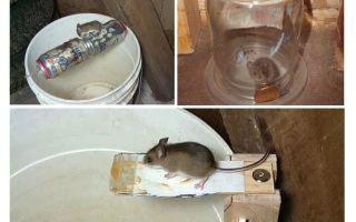 Hoe maak je een muizenval met je eigen handen