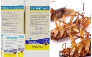 Betekent Regent 800 tegen kakkerlakken
