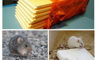 Of muizen penoplex eten