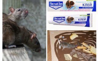 Clay Clean House van knaagdieren en insecten