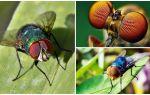 Hoeveel frames per seconde ziet een vlieg en hoeveel ogen heeft hij