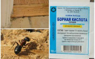 Hoe mieren van een houten huis te verwijderen