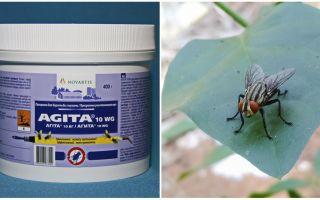 Het gebruik van Agita van vliegen