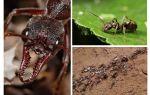 Alles over mieren