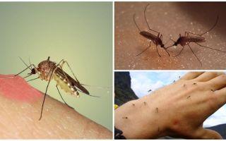 Waarom muggen in de natuur