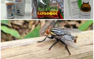 Wat zijn horzels en steekvliegen bang voor, een herziening van de middelen